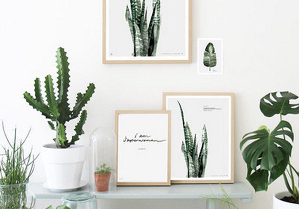botanical-art-prints-the-lovely-drawer-interior-decor