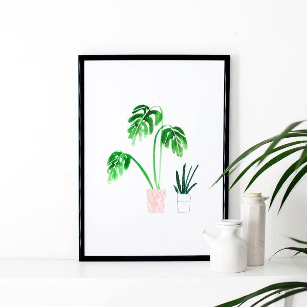 pot-plant