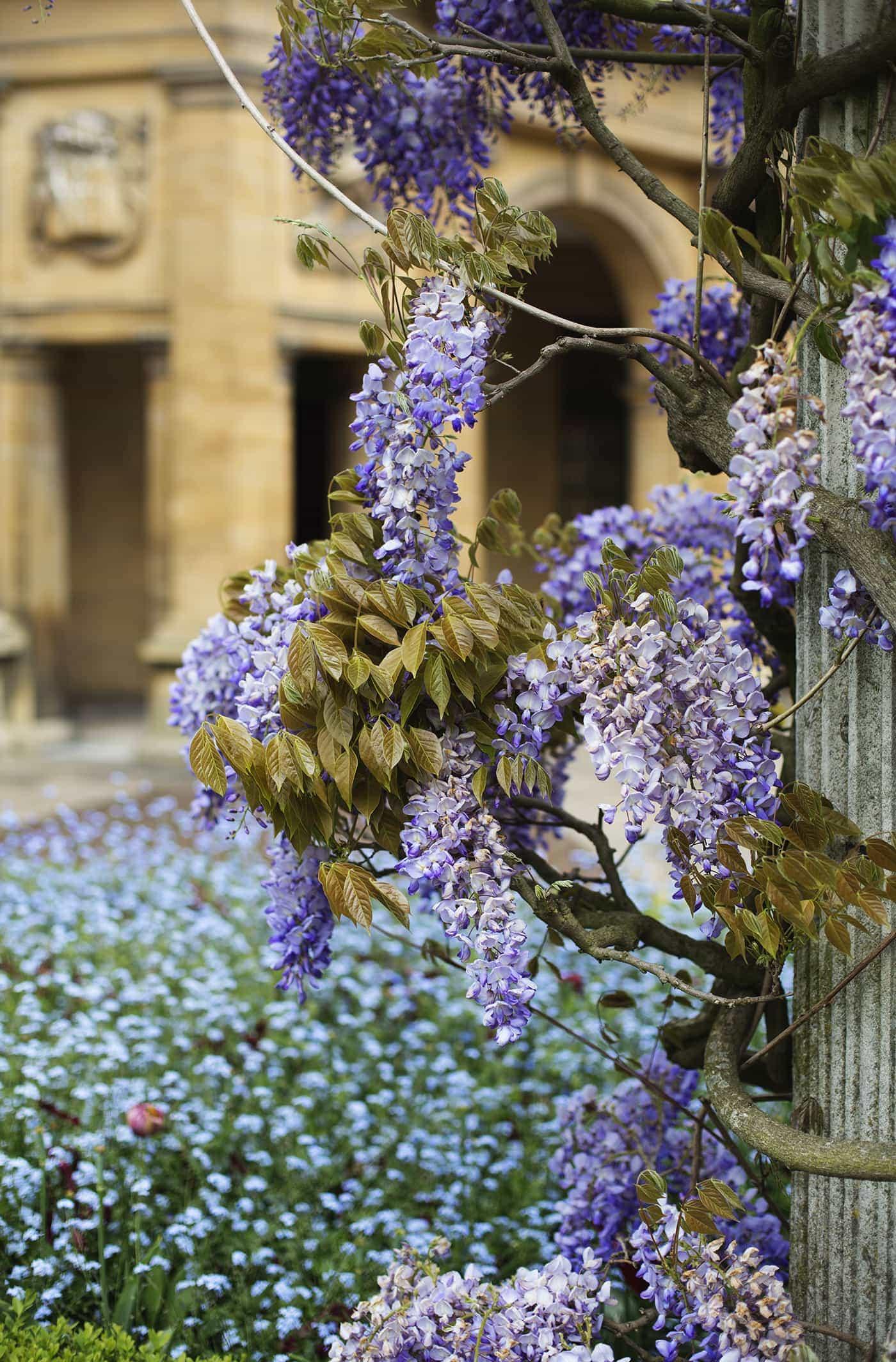 Jo Malone summer entertaining | wisteria