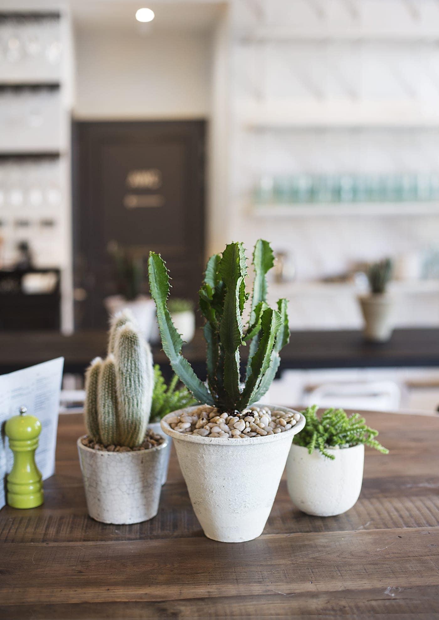 house plants | cacti | home inspiration