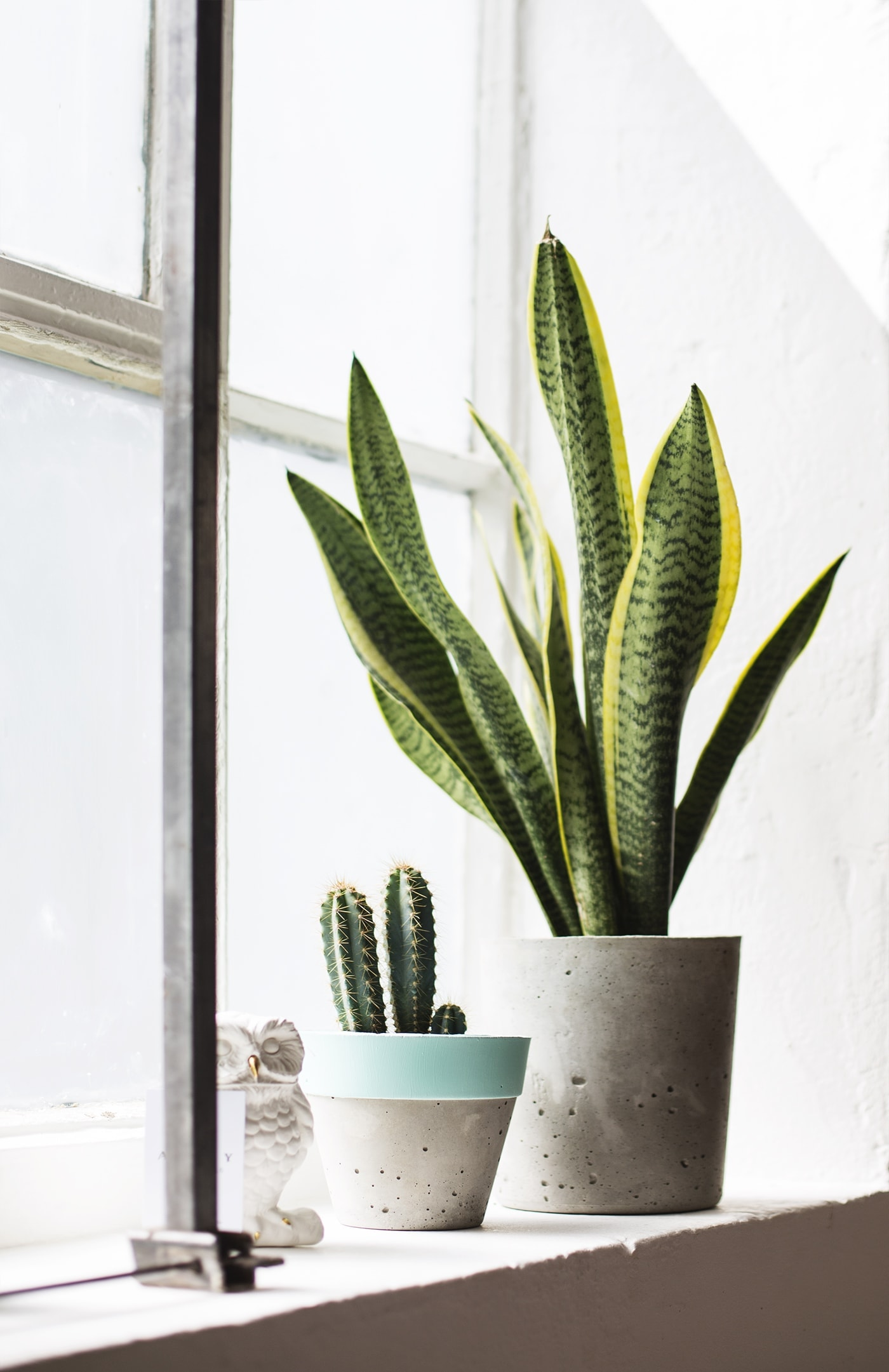 Birthday fun day | The Basics Store | house plants