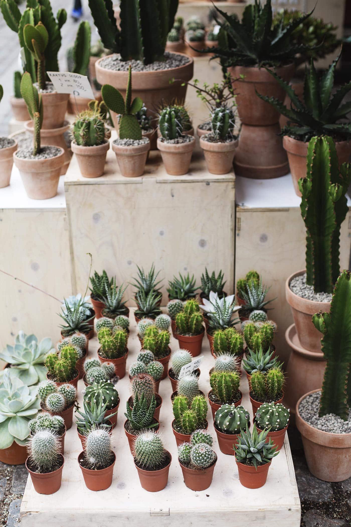 Copenhagen | wanderlust | Kaktus stand | house plants