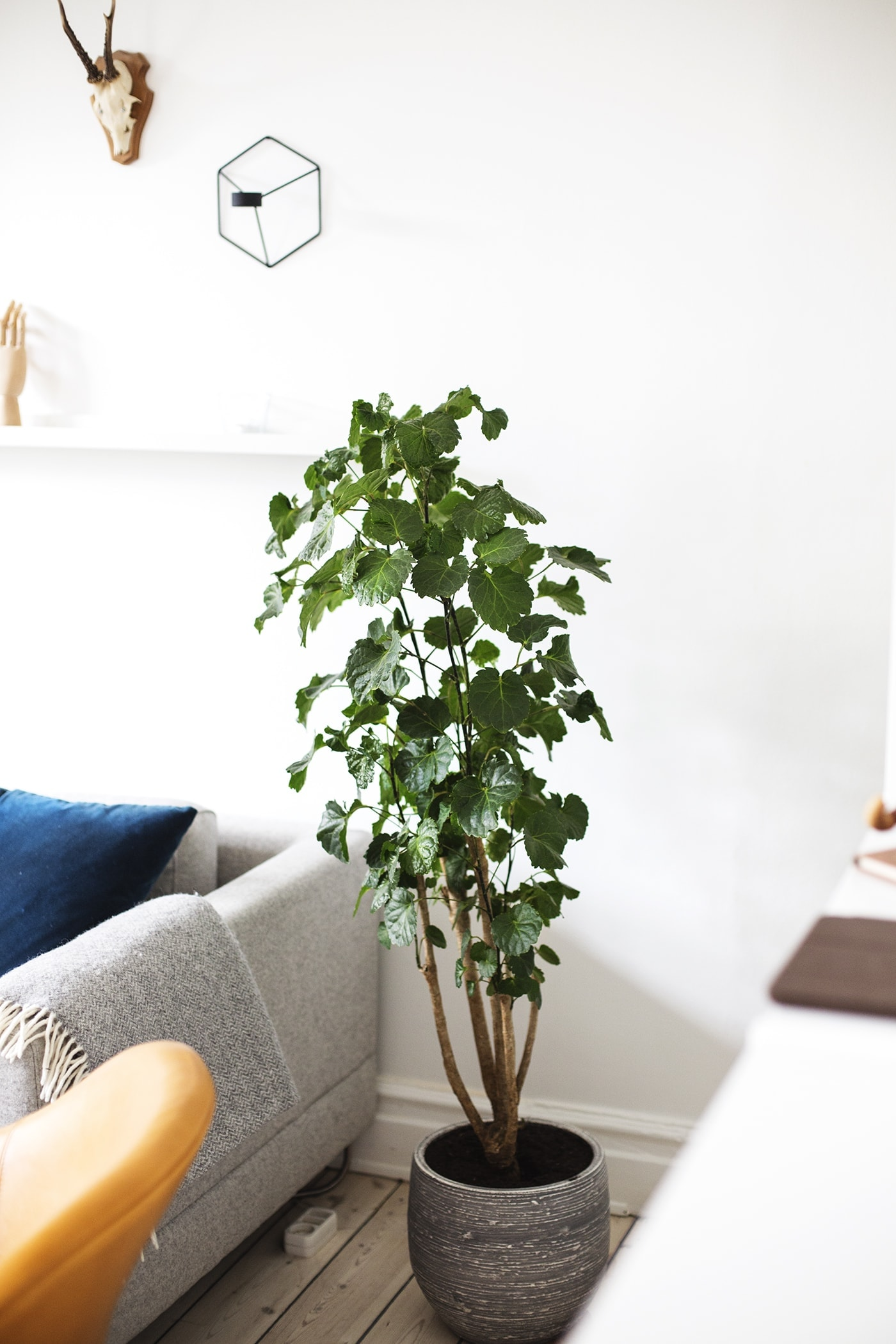 Copenhagen | wanderlust | air bnb living room 5