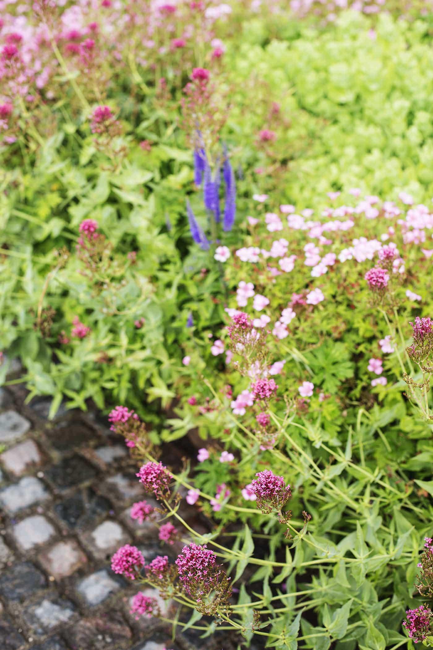 Copenhagen | wanderlust | kastellet park flowers