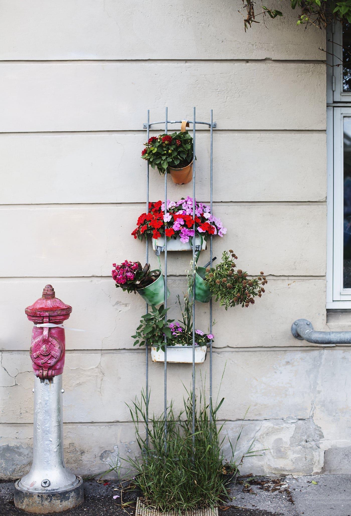 Copenhagen | wanderlust | street flowers
