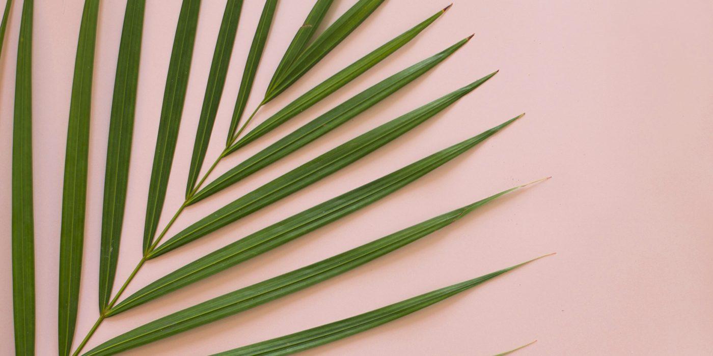 palm love | freebies | desktop wallpapers | tropical