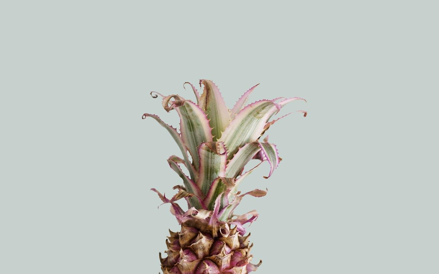 pineapple party | freebies | desktop wallpaper | tropical