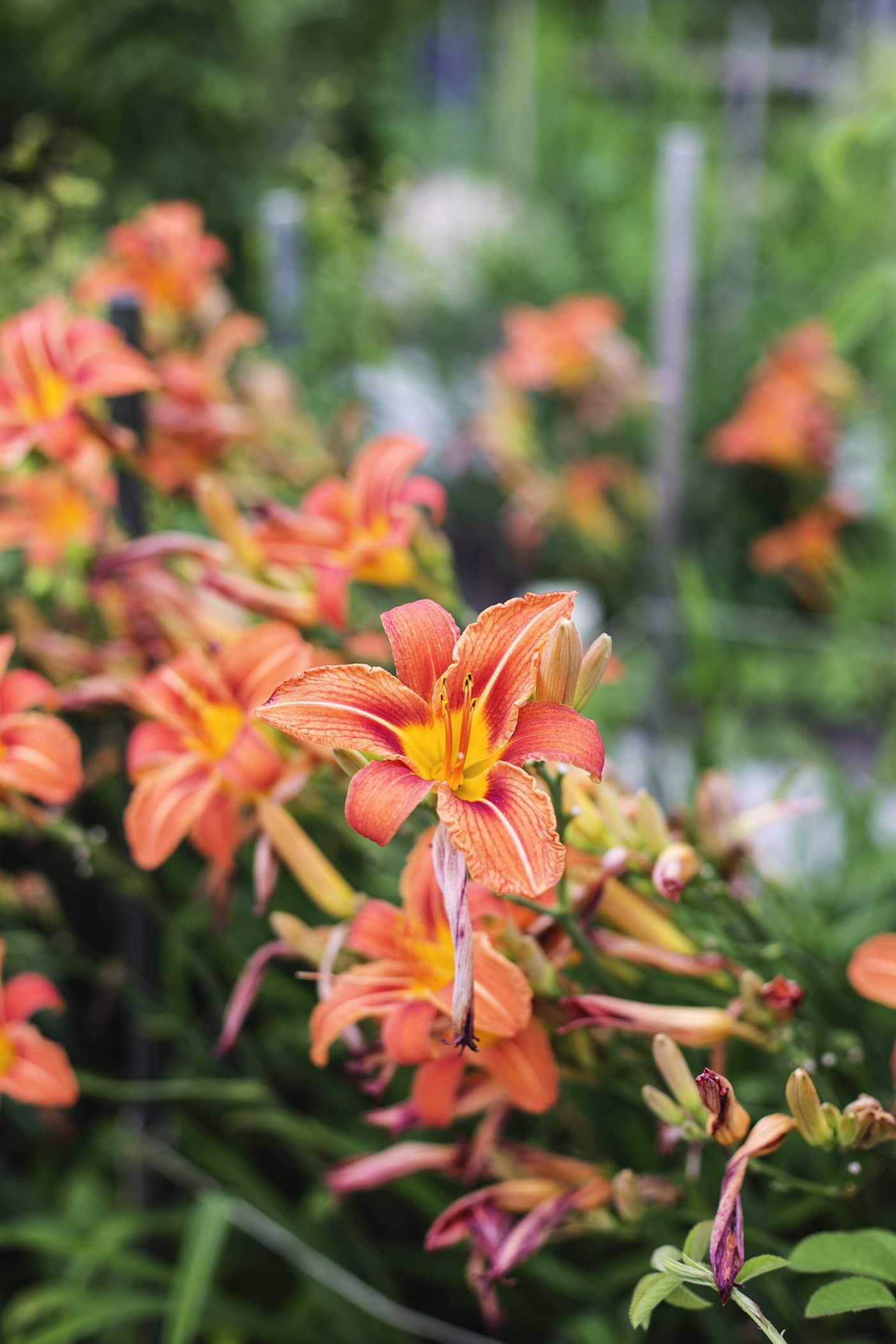 copenhagen-wanderlust-botanical-gardens-2