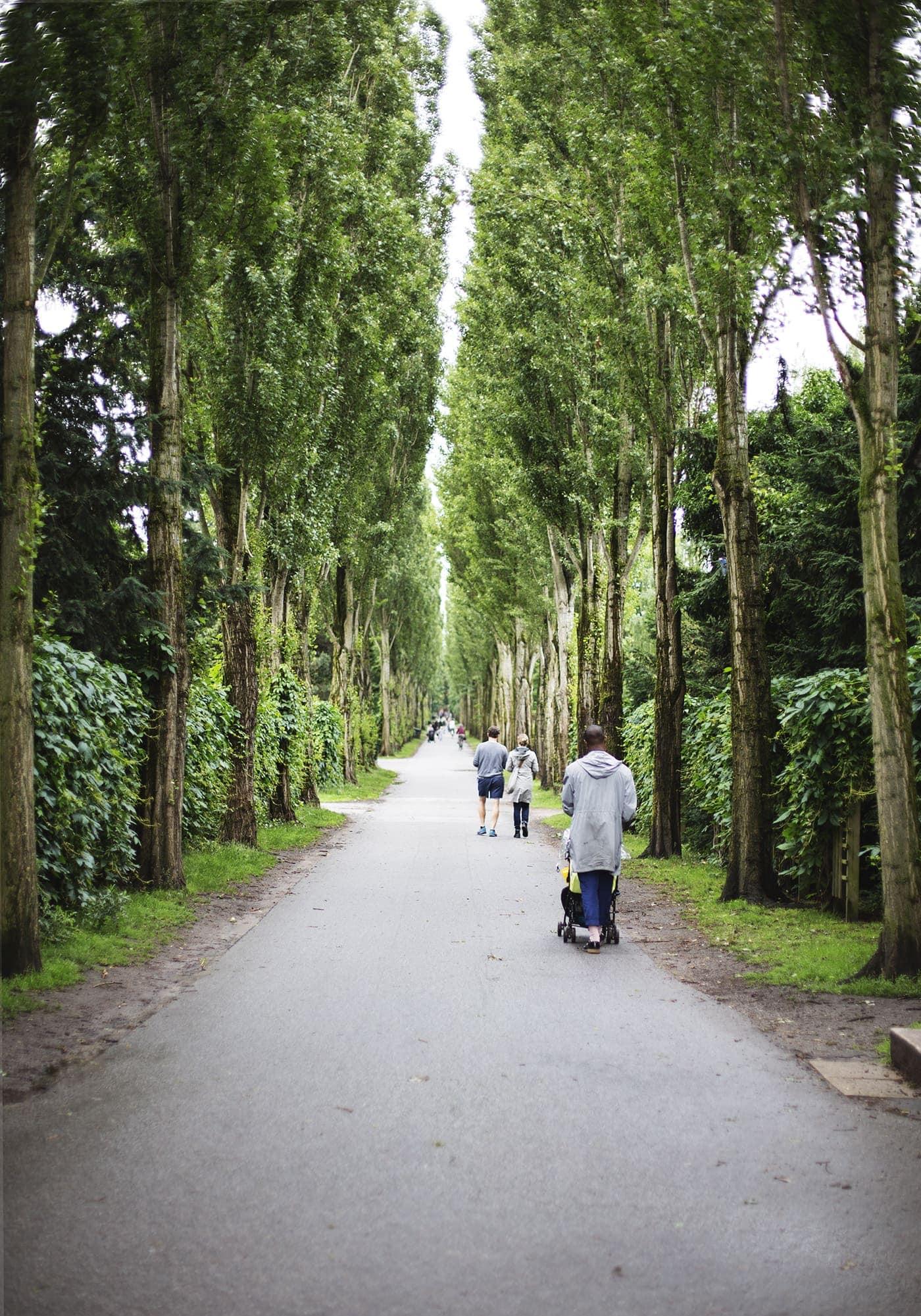 copenhagen-wanderlust-cemetery-trees