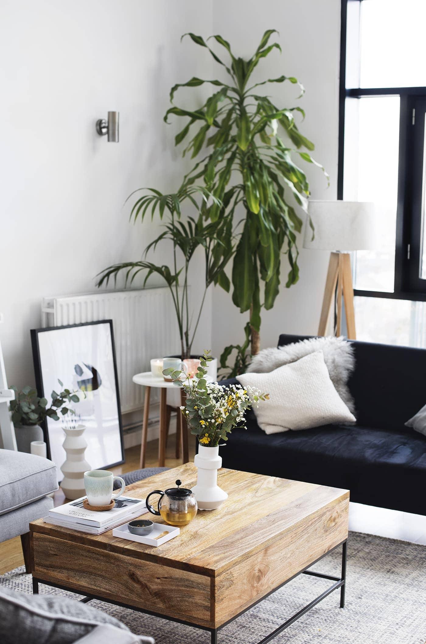 Living Room Plant Ideas