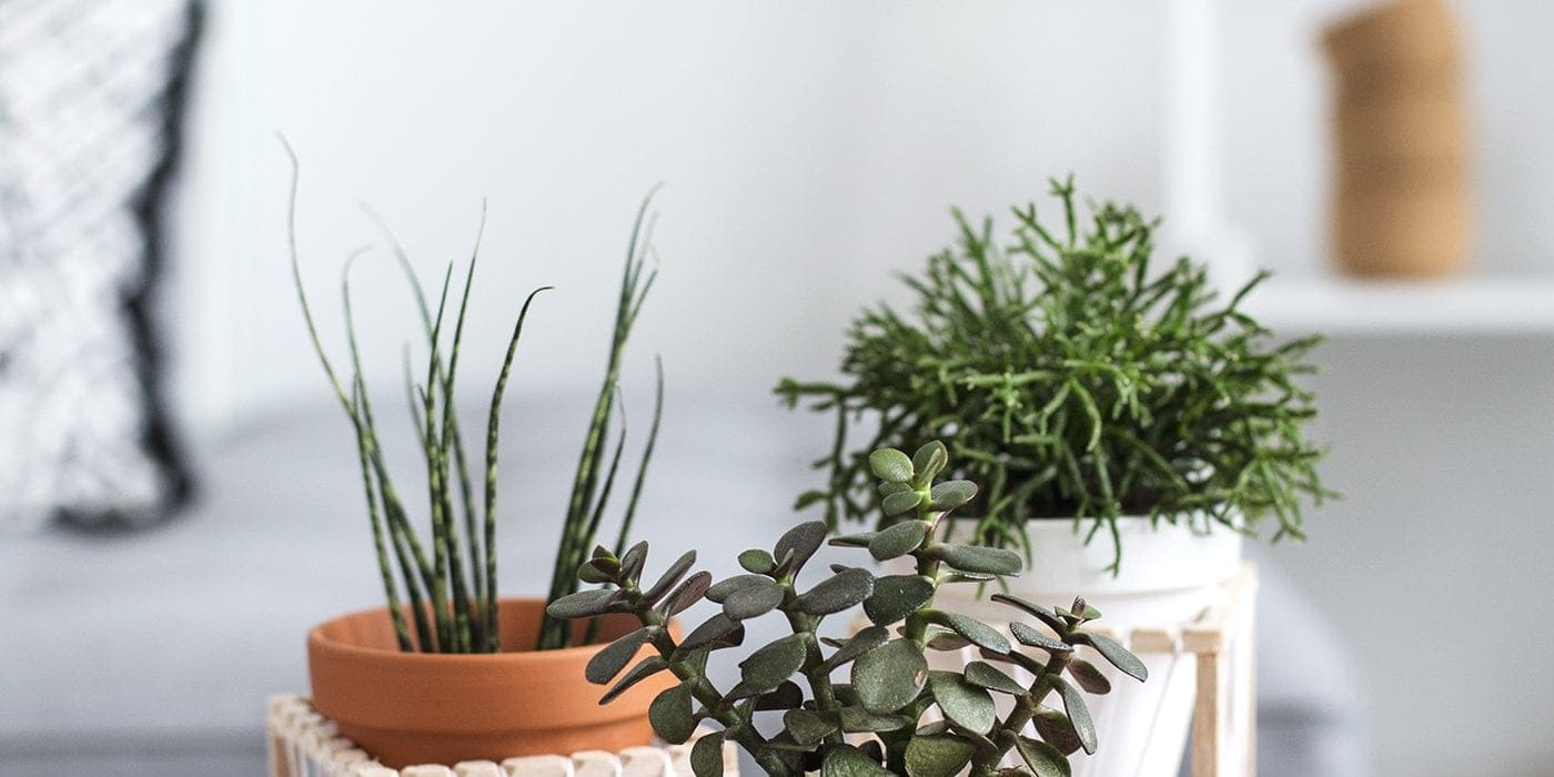 DIY decorative plant stands 1